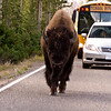 Sept 16, 2009 Slower Traffic Please Keep to the Right...  Yellowstone National Park...