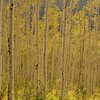 September 9, 2009 (09-09-09) The Colorado Aspens...