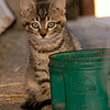 July 10, 2009