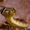 December 20, 2010